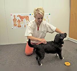 Hyvinvointia koirakolle